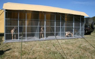 Dogs Kennels in Afghanistan